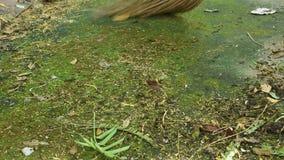 Scopa del giardino che spazza fiore di caduta e foglia asciutta su terra video d archivio
