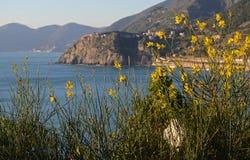 Scopa in fioritura con il mare blu nei precedenti fotografia stock libera da diritti