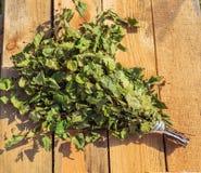 Scopa per i bagni, foto della betulla per voi fotografia stock libera da diritti