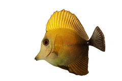 Scopas Tang Royalty Free Stock Photography