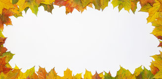 Scope from leaves Stock Photos