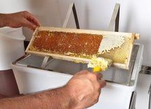Scoperchiando del favo alla vasca di plastica immagine stock libera da diritti