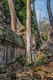 Scoperto nel mezzo della giungla cambogiana il complesso di Angkor fotografia stock libera da diritti
