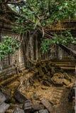Scoperto nel mezzo della giungla cambogiana il complesso di Angkor fotografie stock