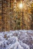Scoppio dell'inverno Fotografie Stock