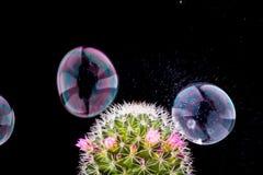 Scoppio della bolla di sapone fotografia stock libera da diritti