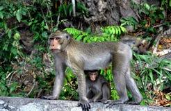 Scoppio Saen, Tailandia: Scimmia e bambino della madre Fotografia Stock Libera da Diritti