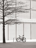 Scopra l'albero e una bici Fotografie Stock