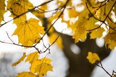 Scopra le foglie nella caduta Fotografie Stock Libere da Diritti