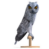Scops Owl Bird. 3D rendering with clipping path Royalty Free Stock Photography