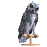 Scops Owl Bird. 3D rendering with clipping path Royalty Free Stock Images