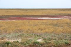 Scorched coastal prairie. On saline earth Royalty Free Stock Photography
