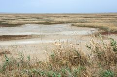 Scorched coastal prairie. On saline earth Royalty Free Stock Images