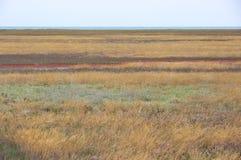 Scorched coastal prairie. On saline earth Royalty Free Stock Photos