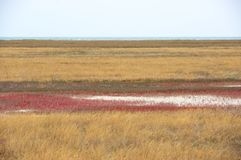 Scorched coastal prairie. On saline earth Stock Images