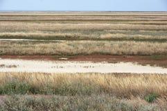 Scorched coastal prairie. On saline earth Stock Photos