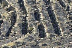 Scorched Earth. Near Taormina, Sicily, Italy Stock Photo