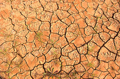 Scorched earth. Scorched earth during drought Royalty Free Stock Photo