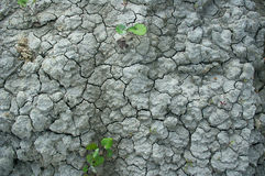 Scorched earth. Stock Images