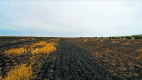 Scorched earth in the field. On which wheat grew stock footage