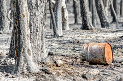 Scorched earth and trees. Scorched earth and forests in the municipality of Biure after the tragic wildfires in Catalonia Royalty Free Stock Photos