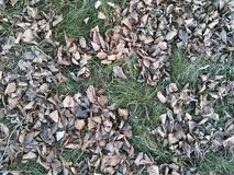 Scorched foliage. Grimy foliage on the grass. Late fall royalty free stock photography