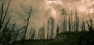 Scorched forest Stock Photo