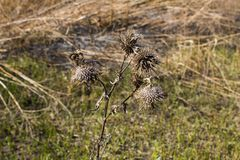 Scorched grass meadow Royalty Free Stock Photography