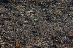 Scorched grass Stock Photo