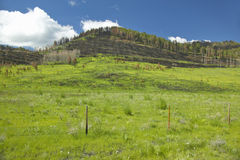Scorched hillside and fresh spring growth in Centennial Valley, Lakeview, MT Stock Photo
