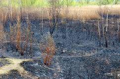 Scorched spring dry grass and rubbish on ashes. In background shrub with green foliage Royalty Free Stock Photography
