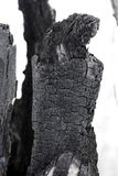 Scorched tree trunk. The texture of the burnt tree_ stock image