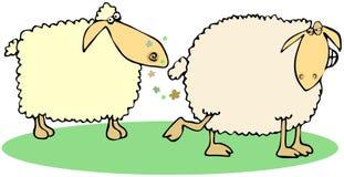 Scoregge delle pecore Immagine Stock