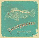 Scorpaena. Label with the words and images of the sea ruff Stock Image