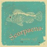 Scorpaena Stock Image