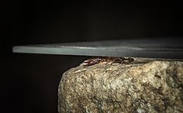 Scorpio hiding under a stone. A brown scorpion sits on a stone in the dark stock image