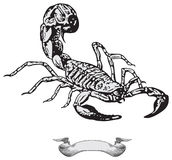 Scorpio vector Royalty Free Stock Image