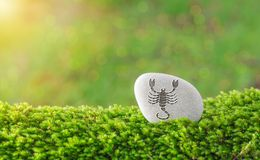Scorpio zodiac symbol in stone. On grass with nature bokeh light background royalty free stock photography