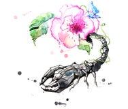 scorpion illustration stock