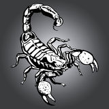 Scorpion. Made as graphic, useful for web and print. This file is also available as EPS-File Stock Images