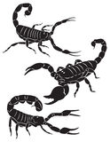 Scorpion. Scorpio is depicted in Figure Stock Photography