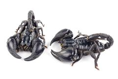 Scorpion Images stock