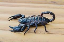 Scorpion Photos libres de droits