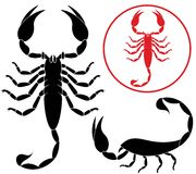 scorpion Lizenzfreies Stockfoto