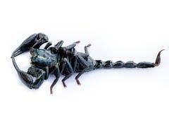 scorpion Lizenzfreie Stockbilder
