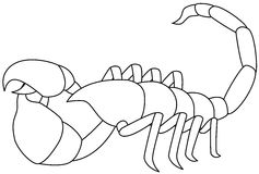 Scorpion. Vector illustration of a white scorpion, isolated Stock Photos