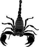 Scorpion Royalty Free Stock Image