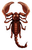 Scorpion - Buthus genus. Illustration of a Buthus genus scorpion on a white background Stock Photos