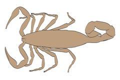 Scorpion Royalty Free Stock Photos