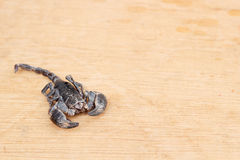 scorpion för emporerimperatorpandinus arkivfoto